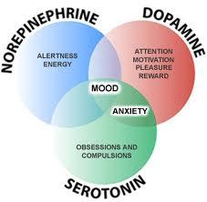 neurotransmitters Amino Acids