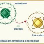 free radical nuetralizers 150x150 Free Radical Scavengers