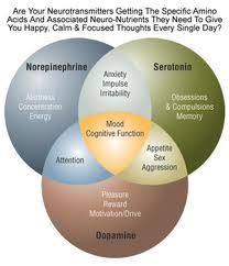 neurotransmitters2 Natural Health Alternatives to Treat Depression, Anxiety and ADD   Dr. Bronner Handwerger